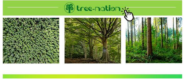 J2 Servid - Tree Nation
